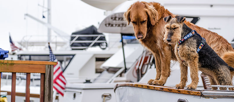 redningsvest til små hunde